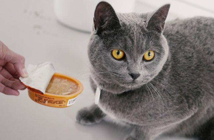 Чем рекомендуется кормить кошку после стерилизации. Поведение кошек после стерилизации. Уход за кошкой после стерилизации Уход и питание кошки после стерилизации