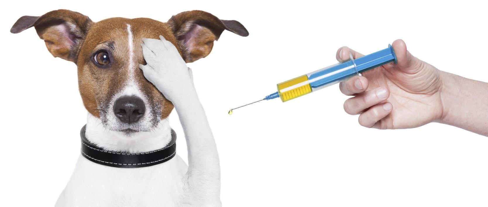 חיסון לכלב – חיסון משושה לכלבים