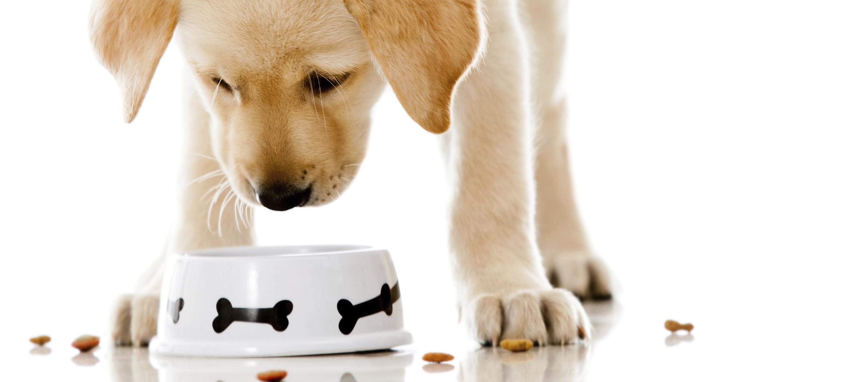 ?מה מותר לכלב לאכול