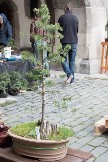 bonsaje-zvolen-zamok-10