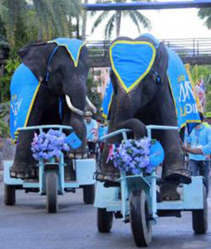 Elephants-Bike-for-Mom-Thailand