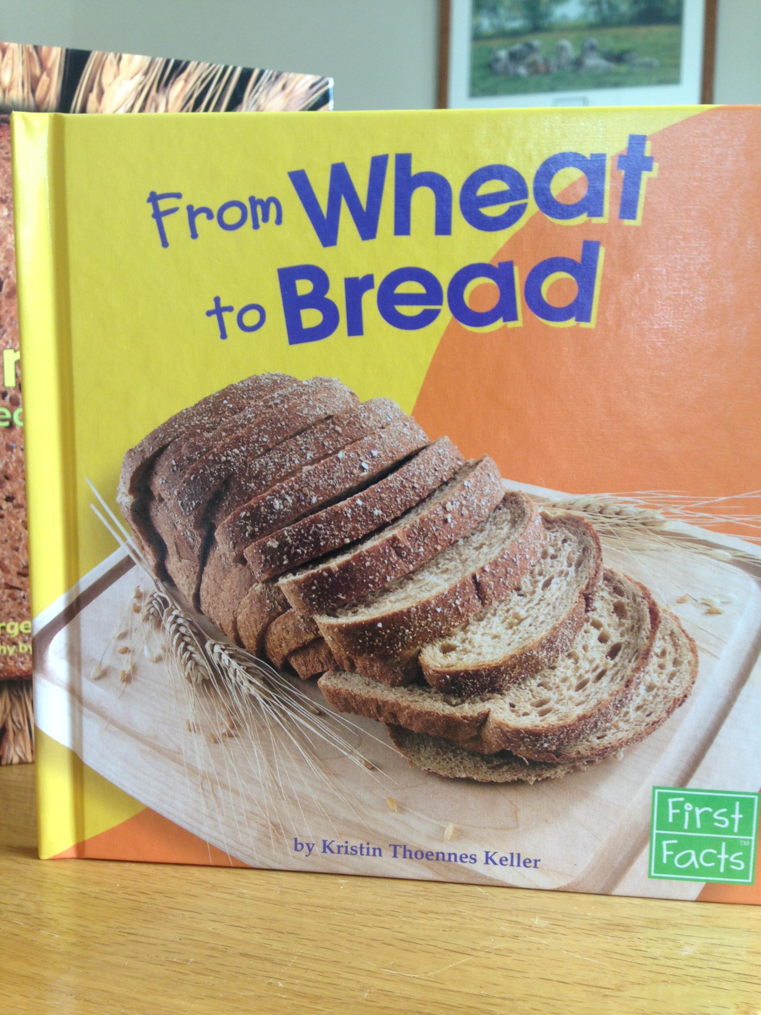 Wheat Activities For Preschool And Kindergarten