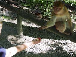 Affen mögen Popcorn