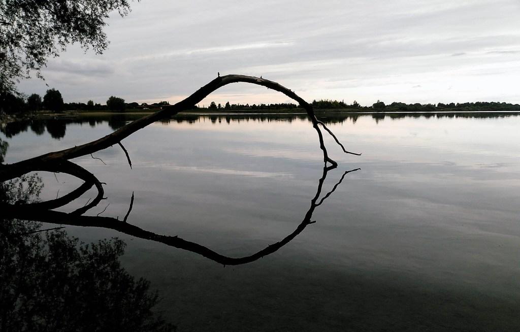 Kontrastreich - der Baum an einem trüben Tag