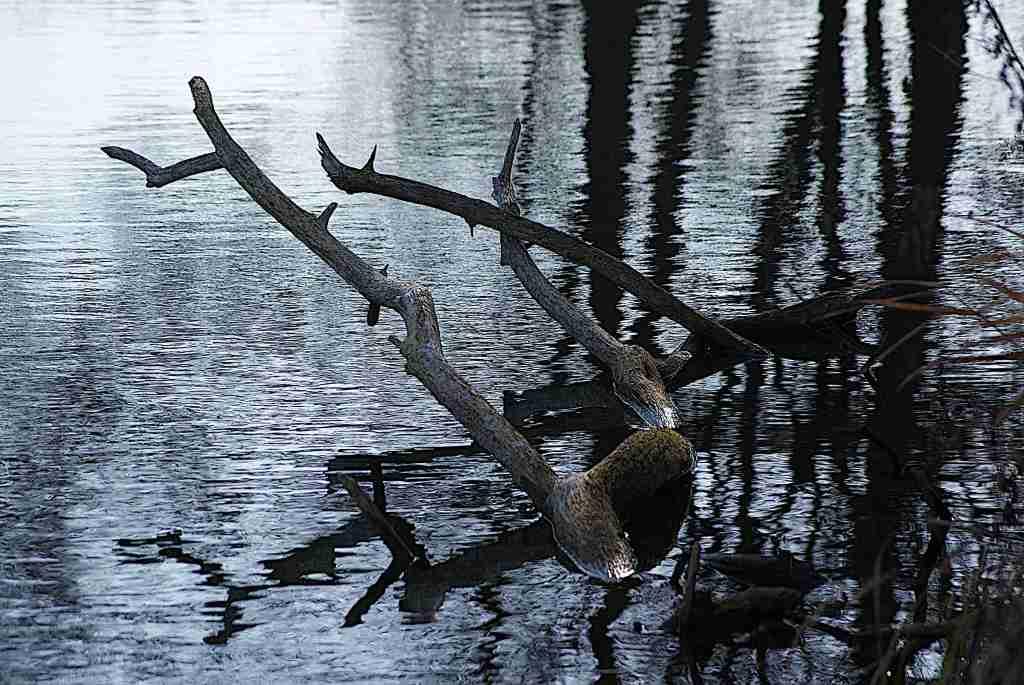 Totholz im Wasser an einem kleinen Biotop