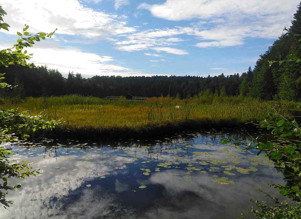 Uferzone am Hackensee - nicht beschwimmbar