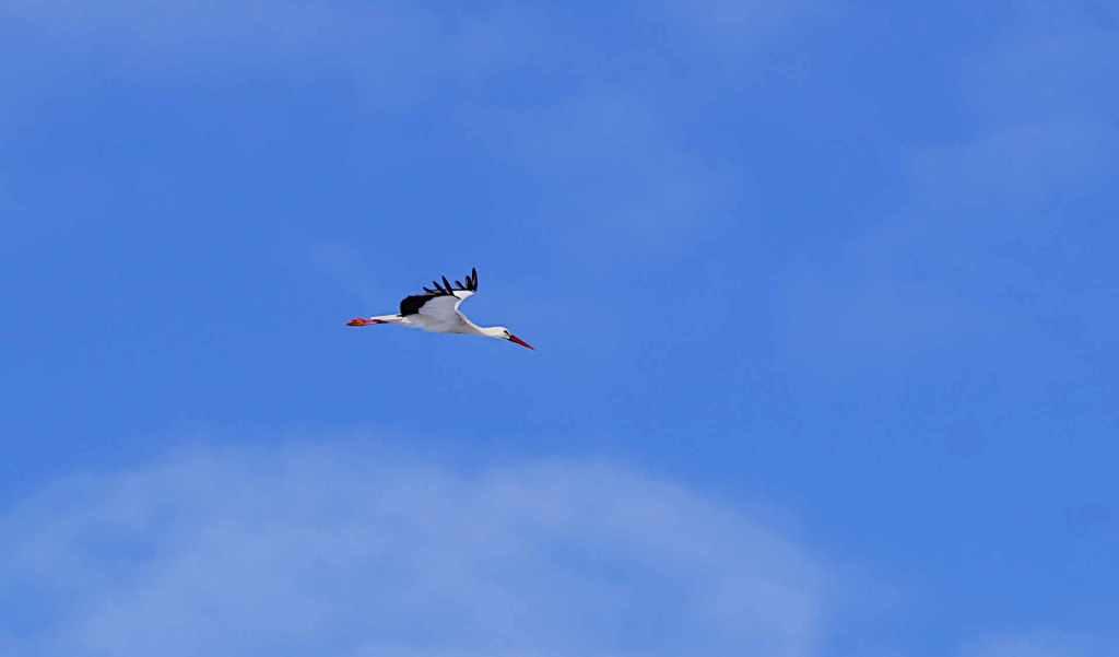 Ein Storch kreist am Himmel - gegen schlechte Laune