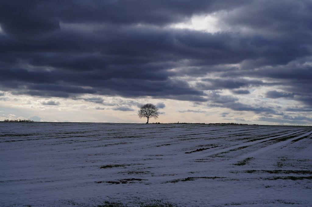 Carpe Diem - Baum im Winter, düsterer Himmel