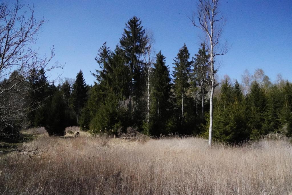 Im Zengerwald:: Mitten im Naturschutzgebiet