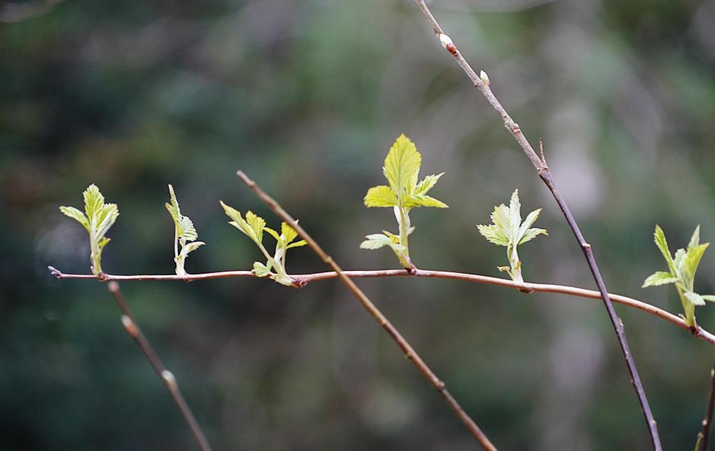 Sollacher Forst: Zarte Tupfer in grün