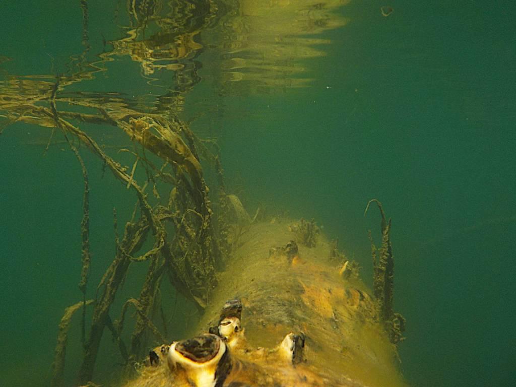 Äste unter Wasser