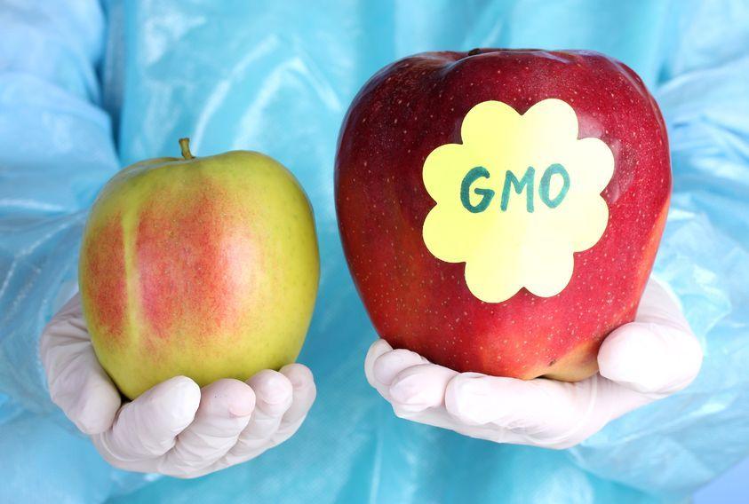 5 faktów na temat GMO