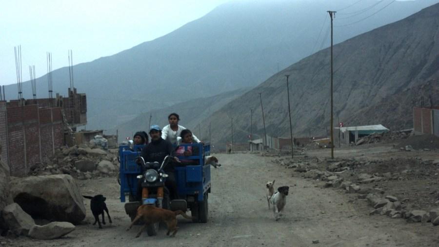 Hunde über Hunde über Menschen stromern durch die pueblos jovenes von Lima.