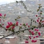 Die Pueblos Jovenes von Lima