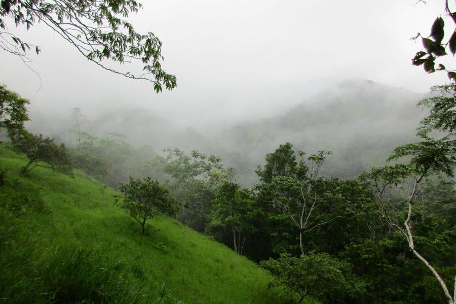 Nach dem Dschungelregen.
