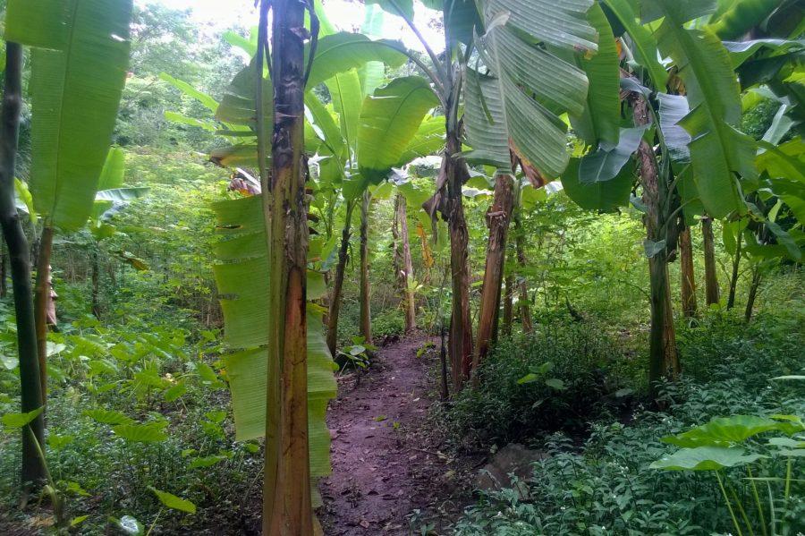 Gewohnheiten und Bananenplantagen.