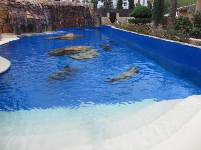 Das Seehund-Becken