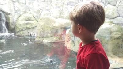 Wir beobachten die Pinguine...