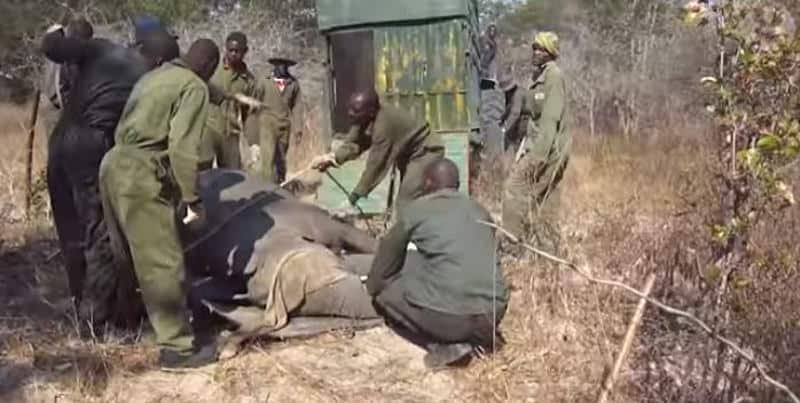 Zimbabwe drought kills 55 elephants at Hwange National Park