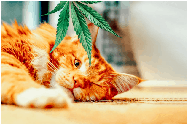 How To Shop For CBD Cat Treats