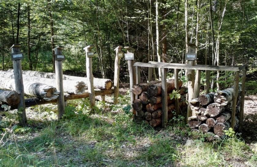 Krótkie, leśne szkolenie na temat drzew