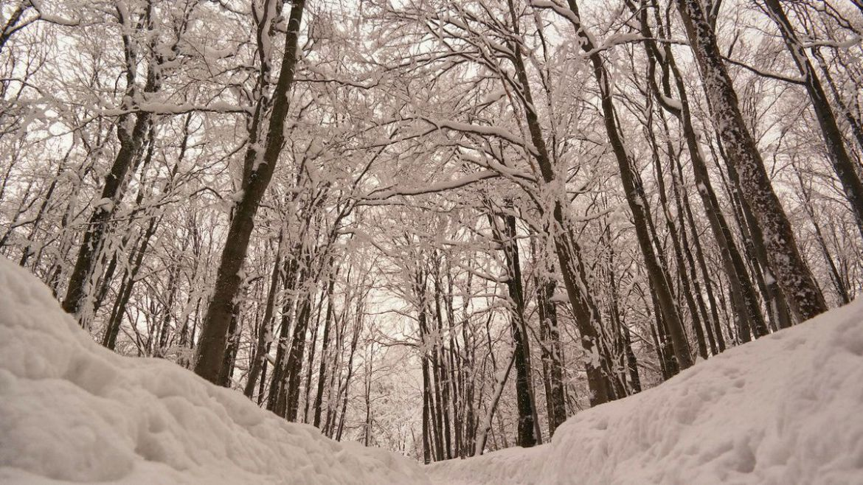 Szlak przez las na Małą Rawkę