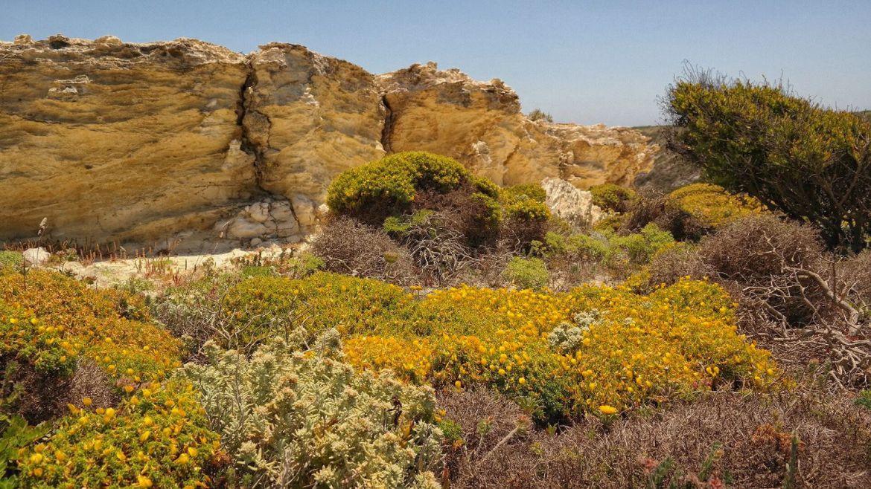 Fortaleza do Beliche zatoka Algarve zachodnie Portugalia roślinność