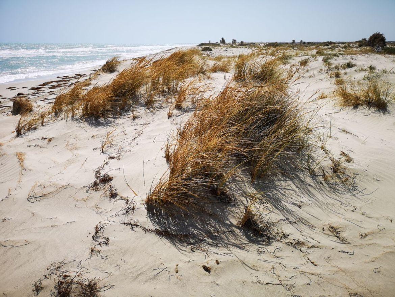 Flamingo Island djerba tunezja wydmy morze
