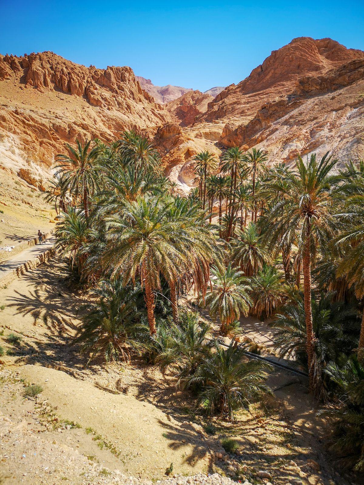chebika oaza panorama palmy góry