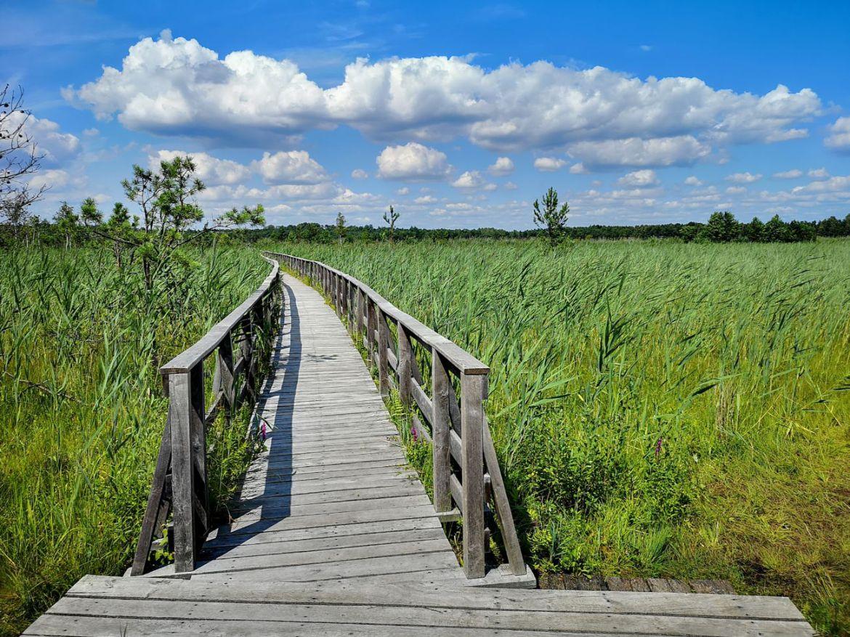 dąb dominik trasa kładki drewniane jezioro moszna lubelskie na weekend co zwiedzić co zobaczyć