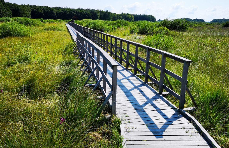 ścieżka przyrodnicza czahary park bagna kładki mostki