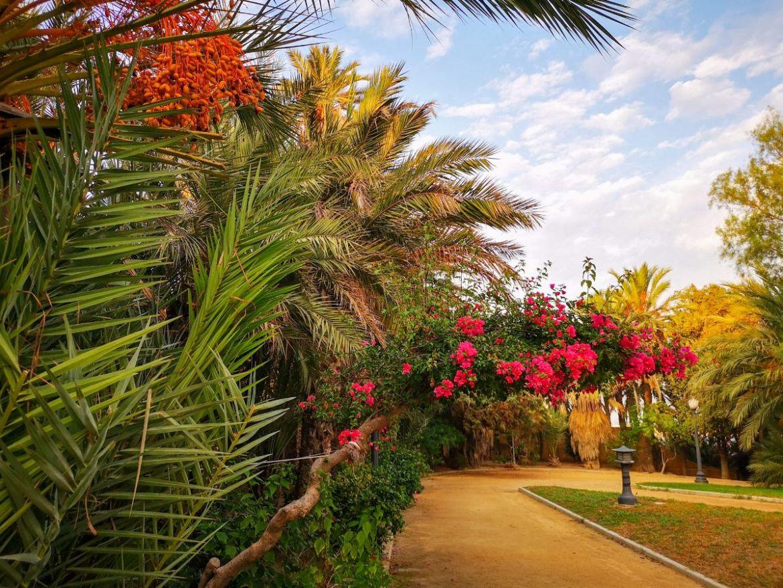 park el palmeral katania zwiedzanie co zobaczyć hiszpania