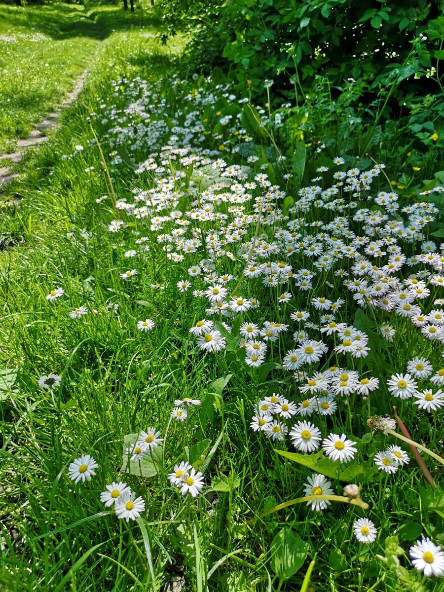 kosarzewka lubelskie łąka zwiedzanie lato