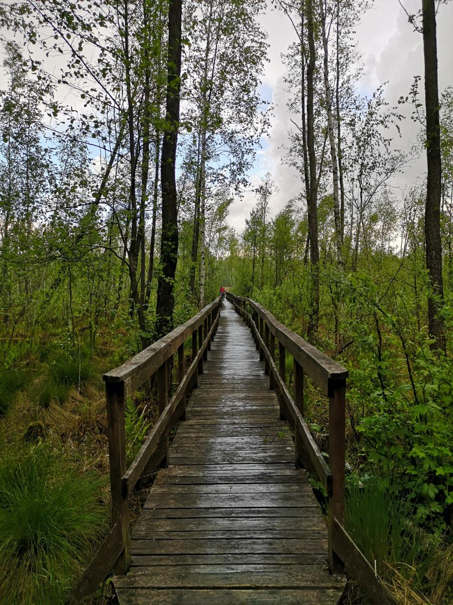 poleski park narodowy ścieżka spławy zwiedzanie lubelskie