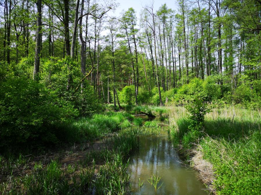 ścieżka przyrodnicza bobrówka lubelskie co zobaczyć z rodziną lubelszczyzna polska rzeka