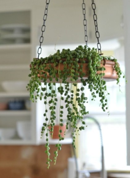 Awesome Succulent Garden Ideas For 2018 33