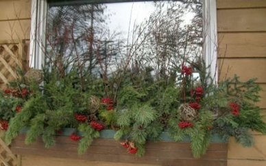 48 Pretty Colorful Winter Plants And Christmas For Frontyard