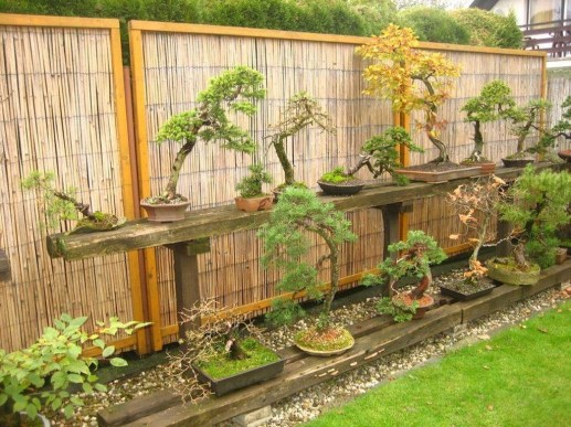 Brilliant Bonsai Plant Design Ideas For Garden02
