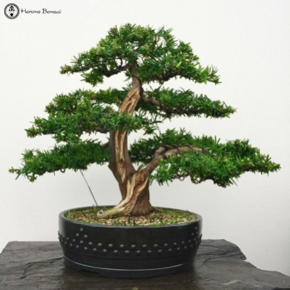 Brilliant Bonsai Plant Design Ideas For Garden06