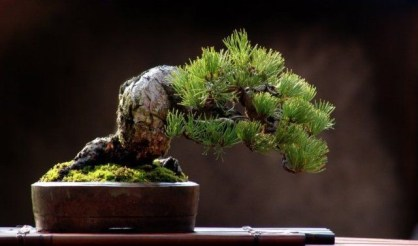 Brilliant Bonsai Plant Design Ideas For Garden07
