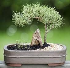 Brilliant Bonsai Plant Design Ideas For Garden08