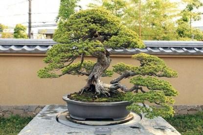 Brilliant Bonsai Plant Design Ideas For Garden10