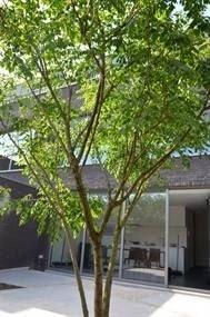 Brilliant Bonsai Plant Design Ideas For Garden16