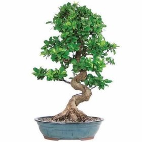 Brilliant Bonsai Plant Design Ideas For Garden22