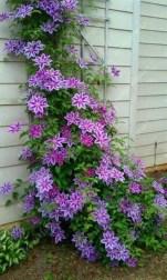 Brilliant Bonsai Plant Design Ideas For Garden26