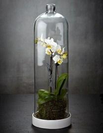 Brilliant Bonsai Plant Design Ideas For Garden37