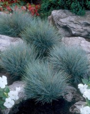 Minimalist Front Yard Landscaping Ideas On A Budget05