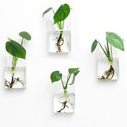 Simple Wall Plants Decorating Ideas01