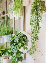 Simple Wall Plants Decorating Ideas19