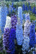 Extraordinary Summer Garden Ideas Just For You 37